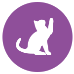 cat-play