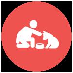 dog-feed